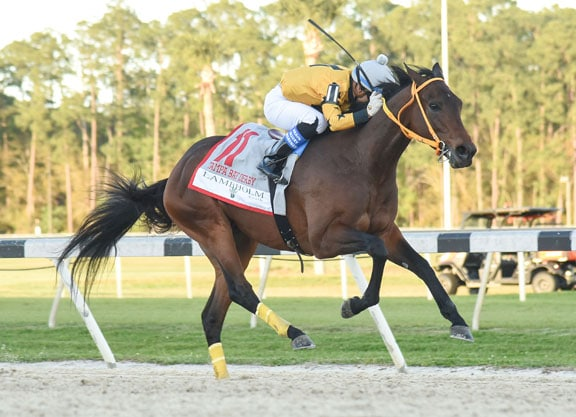 King Guillermo Win Tampa Bay Derby